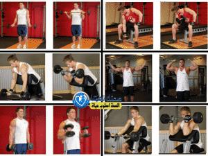 تمارين عضلة الباى (Biceps (biceps brachii