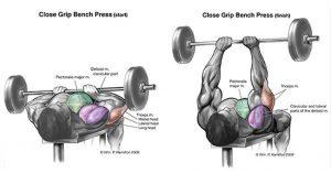 تمارين عضلة التراي