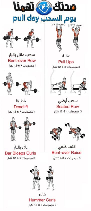 برنامج push pull legs